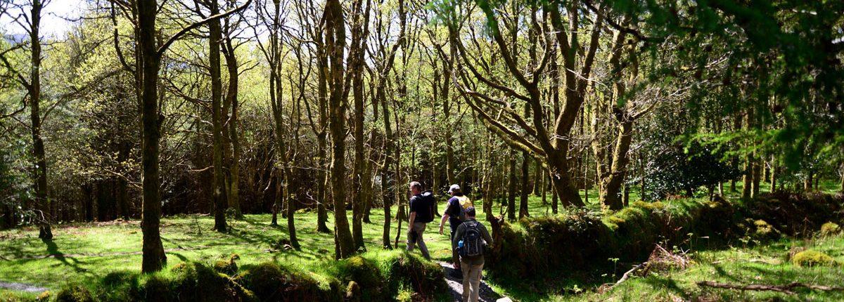 The Wicklow Way - Ireland
