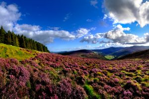 tour from Dublin of Wicklow, Glendalough and Kilkenny