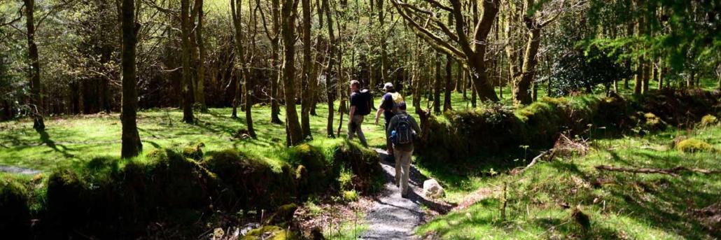 Guided Walks in Wicklow
