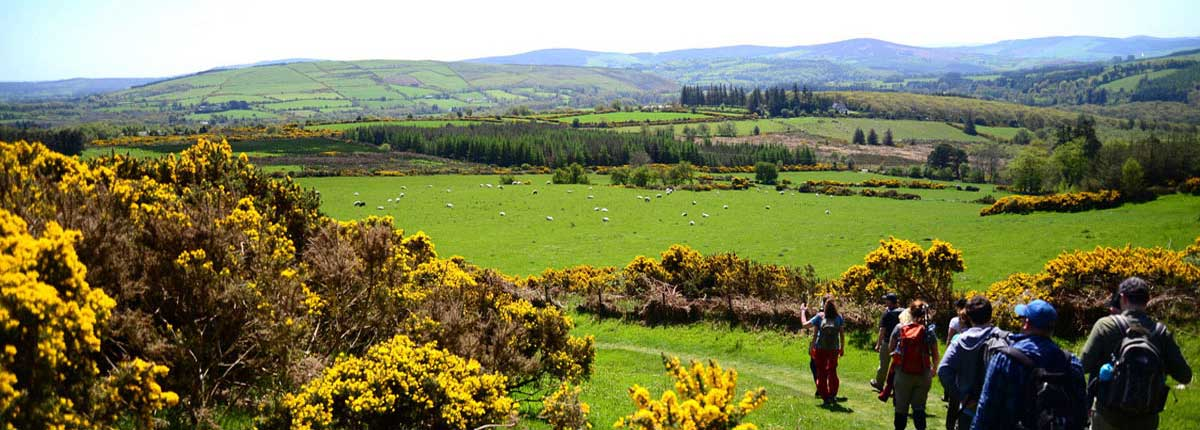 Walking the Wicklow Way